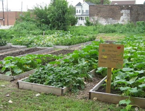 Organizations Win Grants for Community Garden, Fitness Park For Kids